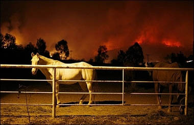 horse, fire, california