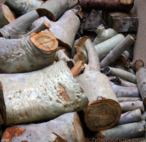 eucalyptus partial suicide 4