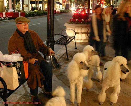 michele roohani christmas via rodeo poodles