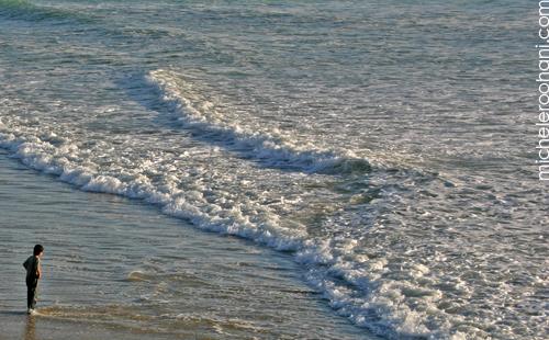 ocean alone micheleroohani