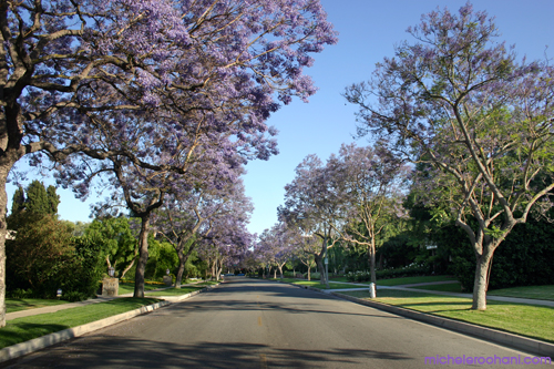 purple rain beverly hills michele roohani