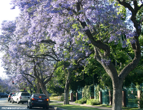 cars under jacarandas michele roohani