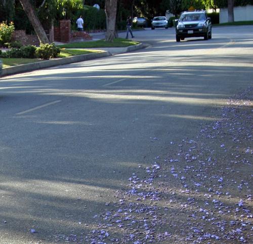 purple rain jacaranda michele roohani