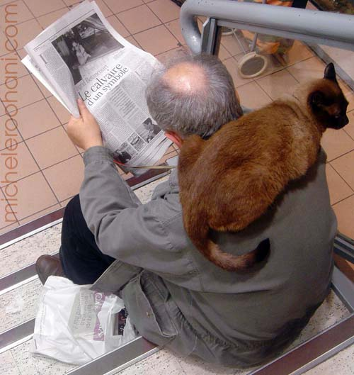 cat on man's back reading michele roohani