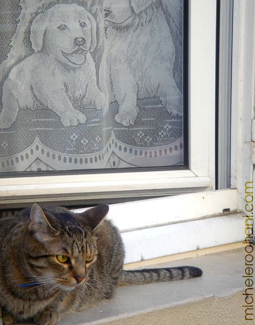 cat with doggy curtain michele roohani