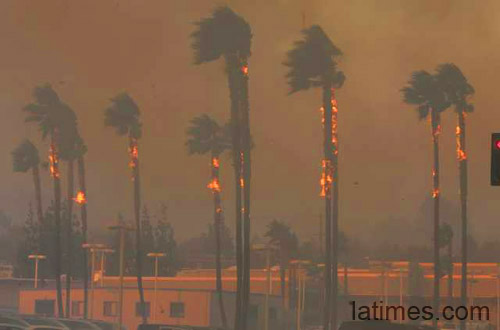 palm trees on fire in california michele roohani
