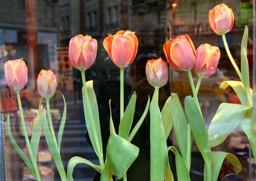 paris tulips nowruz 1388 michele roohani