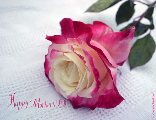 mother's day calligrapahy micheleroohani rose