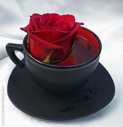 red rose in a black cup micheleroohani