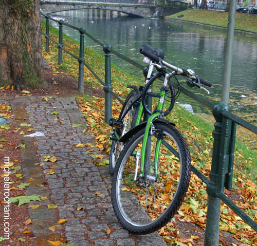 green bike dusseldorf michele roohani
