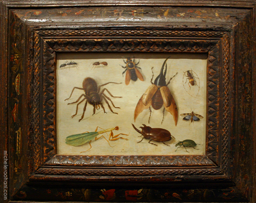 insects and spider kessel michele roohani fine arts museum