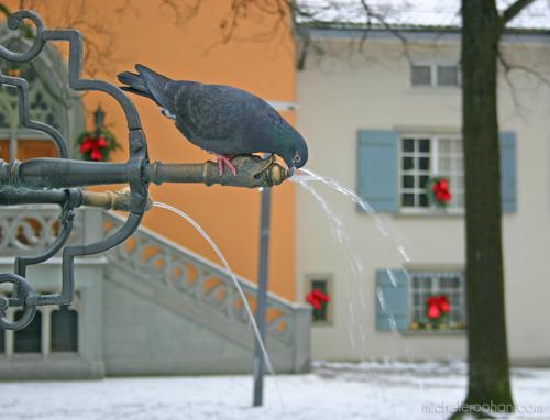 pigeon lindenhof fountain zurich michele roohani