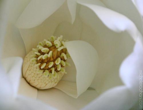 white magnolia san vicente blvd michele roohani