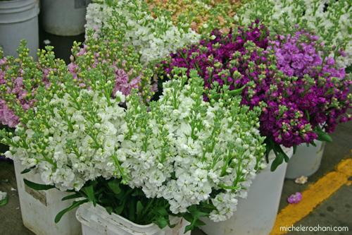 giroflée stock flower michele roohani los angeles flower market