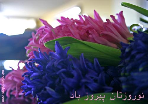 nowruz 1389 michele roohani hyacinths norouz norooz
