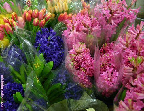 spring norooz michele roohani jacinthe hyacinth nowruz
