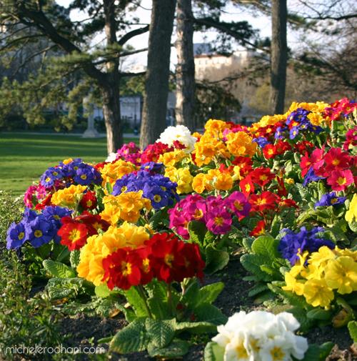 primaveras michele roohani montsouris parc