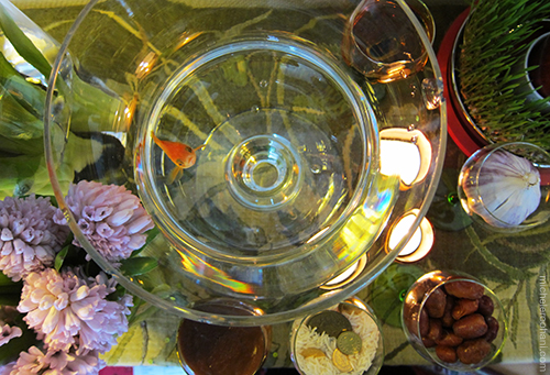 Nowruz goldfish samad michele roohani