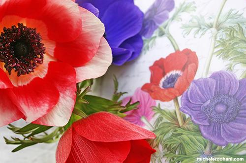 anemones michele roohani