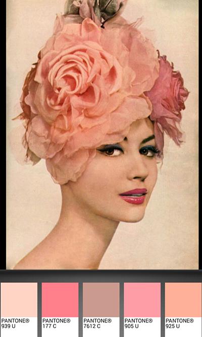 michele roohani dusty rose palette