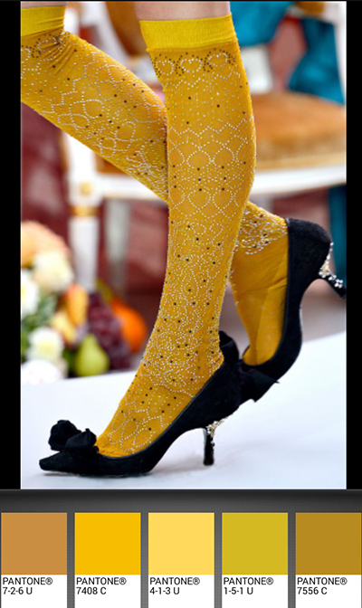 michele roohani sexy stocking Pantone palette